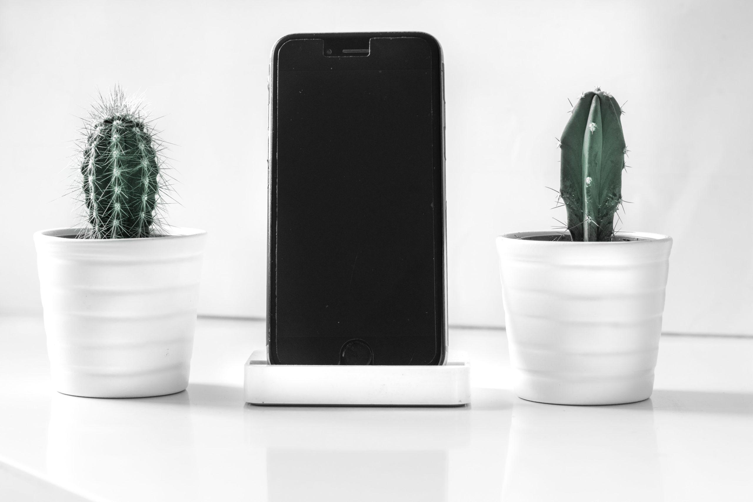 2つのサボテンの間にiPhoneが立ててある画像